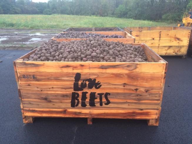 beets in bin